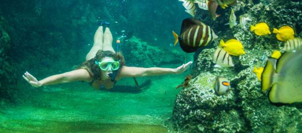 Enjoy Scuba Diving in Tumon bay, Guam